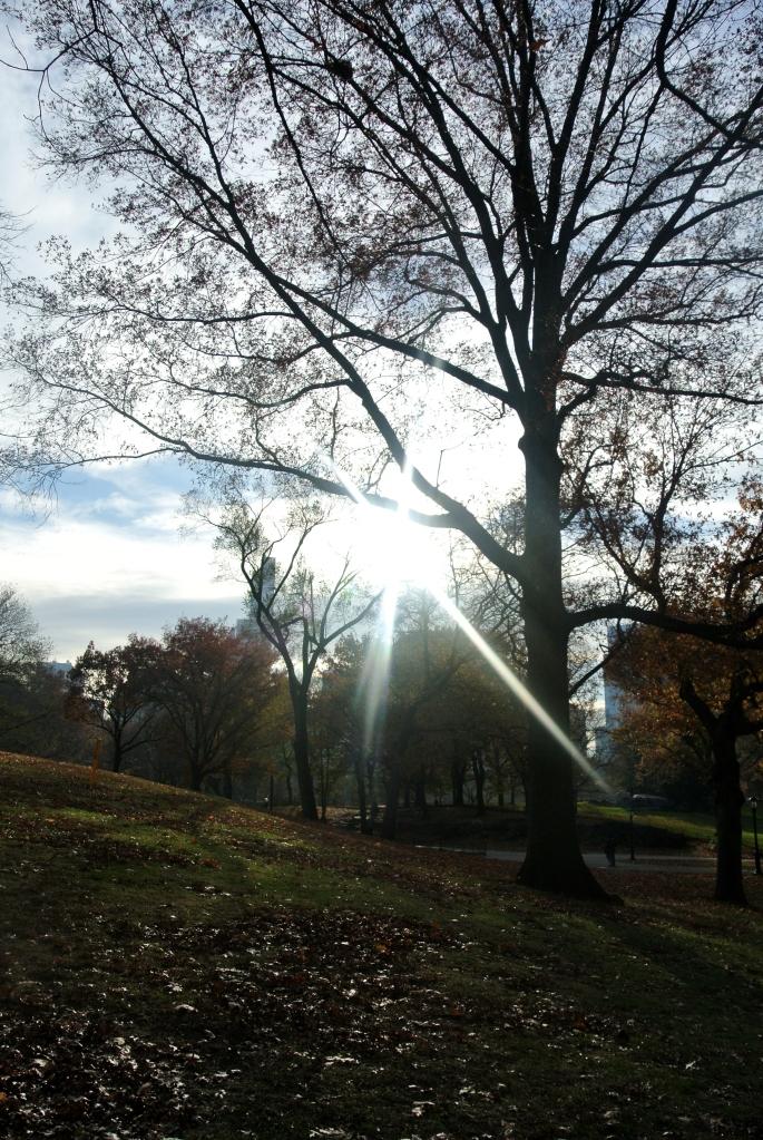 Central Park (4)